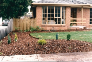 our pretty little conifers 1987
