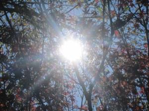 filtered sunlight