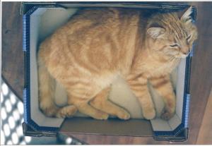 Bartholomew in a box 1999