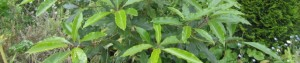 cropped-the-mystery-plant1.jpg