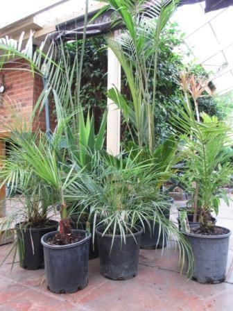 $200 worth of plants