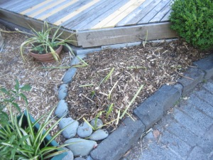 mulched and ready to grow