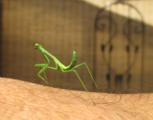 praying mantis joins the arm y