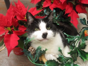 soft-focus Christmas Zorro