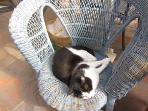 Zorro and the comfy blue cane chair (2)