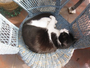 Zorro and the comfy blue cane chair (3)