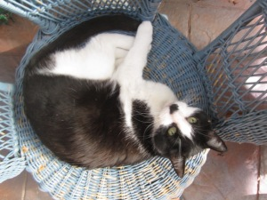 Zorro and the comfy blue cane chair (4)