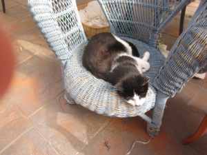 Zorro and the comfy blue cane chair (5)