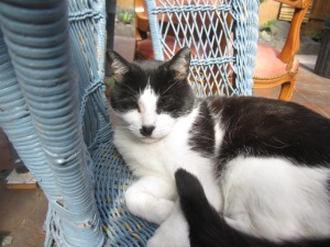 Zorro and the comfy blue cane chair (6)