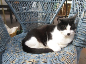 Zorro and the comfy blue cane chair