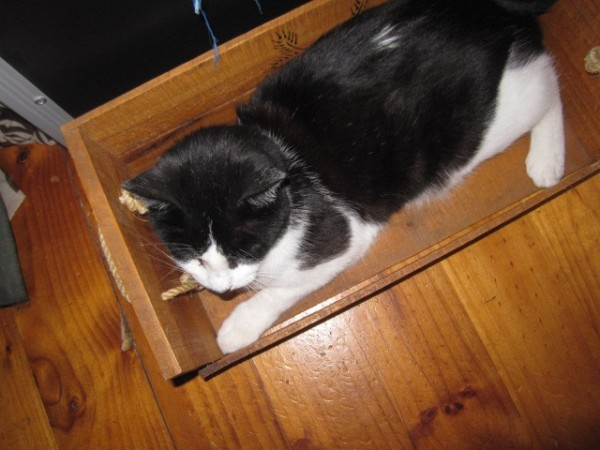 Zorro in a box
