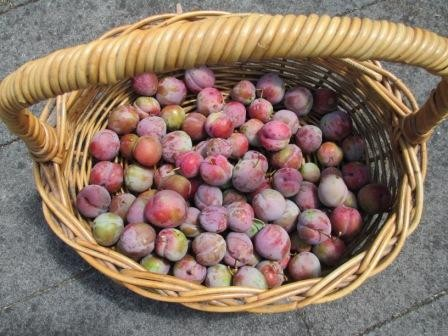 2 kg of plums ready for jam