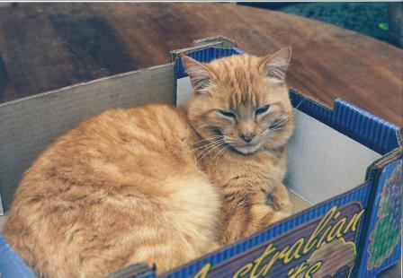 Barthy in a box 1999