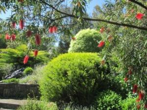beyond the bottlebrush