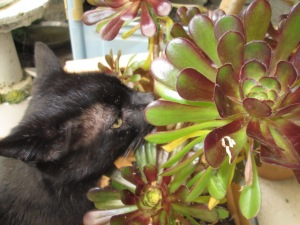 Shadow and the succulent