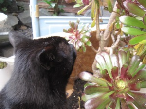 Shadow sniffs the new plant