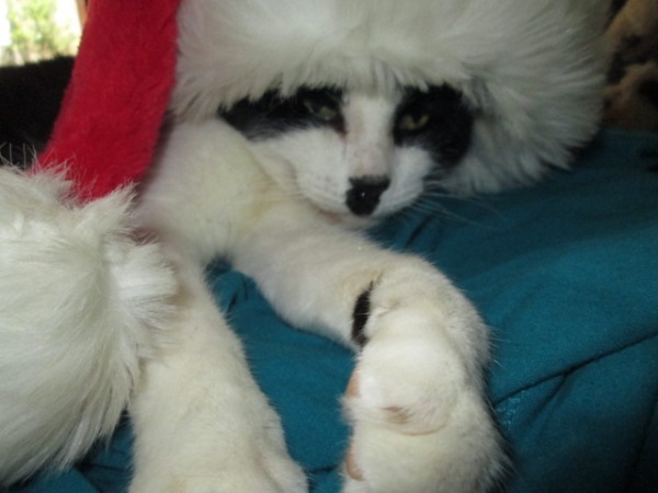 Zorro gets Christmassy (4)