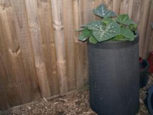 creative compost