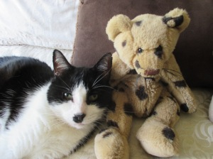 Zorro and the teddy