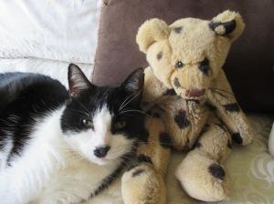 Zorro and the teddy