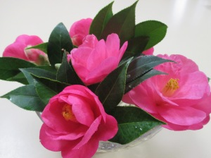 camellias for my birthday (1)