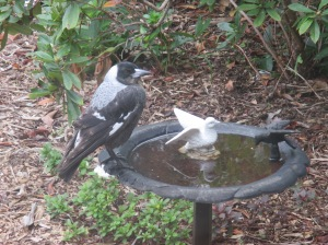which magpie is not real (2)