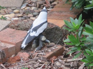 which magpie is not real (3)