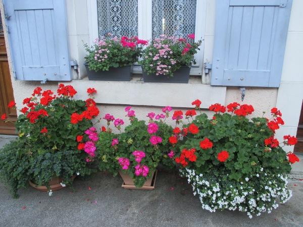 pretty potted garden
