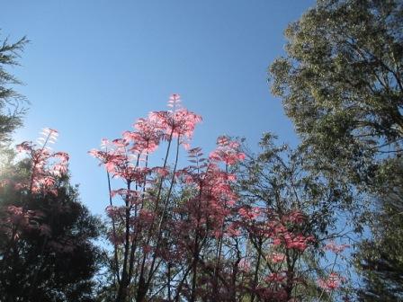 azure sky in spring